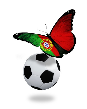Concept - butterfly with Portuguese flag flying near the ball, like football team playing   photo