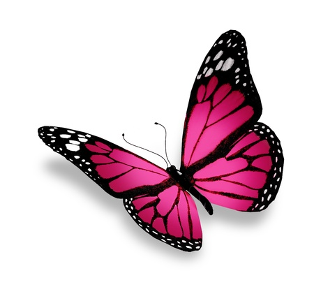 black and blue butterfly flying: Pink butterfly, isolated on white background