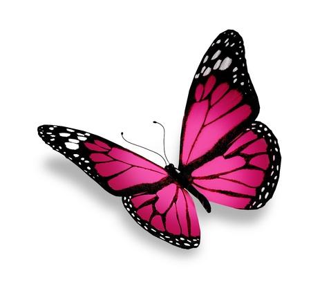 mariposa azul: Rosa mariposa, aisladas sobre fondo blanco