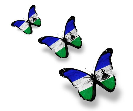 Three Kingdom of Lesotho flag butterflies, isolated on white photo