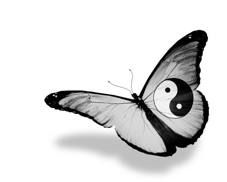 Dao butterfly flying, isolated on white background Stock Photo