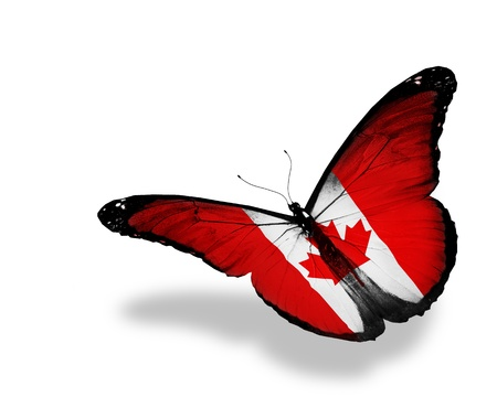 flag day: Canadian flag butterfly flying, isolated on white background