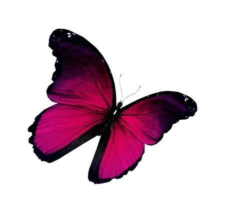 papillon rose: Violet papillon volant, isolé sur fond blanc