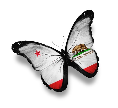 California flag butterfly, isolated on white photo
