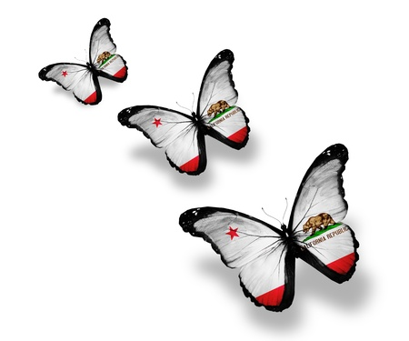 Three California flag butterflies, isolated on white photo