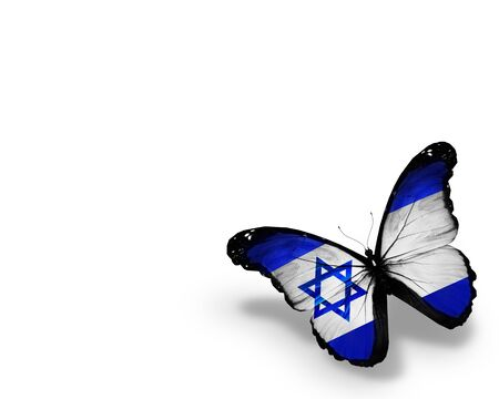 israeli: Israeli flag butterfly, isolated on white background Stock Photo
