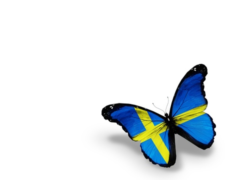 Swedish flag butterfly, isolated on white background photo