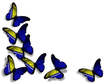 Bosnia and Herzegovina flag butterflies, isolated on white background photo