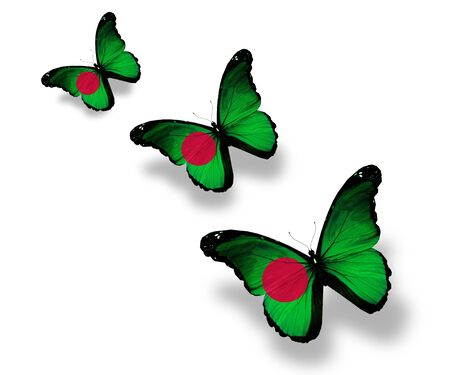 Three Bangladesh flag butterflies, isolated on white photo