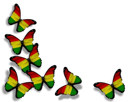 Bolivian flag butterflies, isolated on white background photo