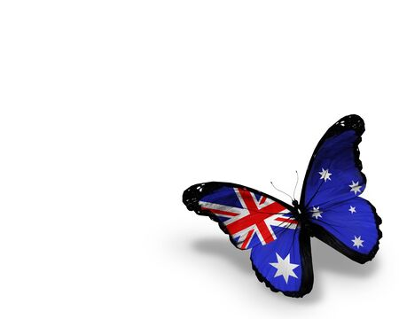 Australian flag butterfly, isolated on white background photo