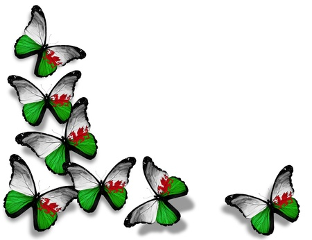 welsh flag: Welsh flag butterflies, isolated on white background