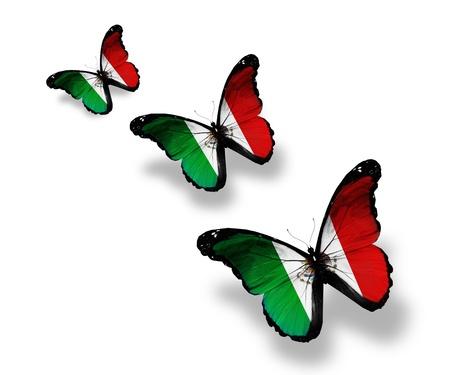 bandera mexicana: Tres mariposas bandera mexicana, aislados en blanco Foto de archivo