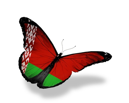 Belarussian flag butterfly flying, isolated on white background photo