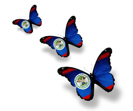 Three Belize flag butterflies, isolated on white Stock Photo