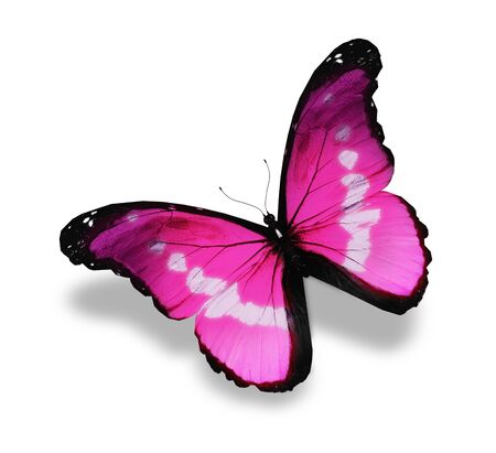 colorful butterfly: Pink butterfly, isolated on white