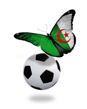 Concept - butterfly with  Algerian flag flying near the ball, like football team playing   photo