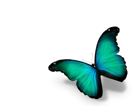 Blue butterfly, isolated on white background photo