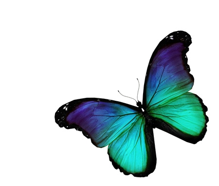 Turquoise butterfly on white background photo
