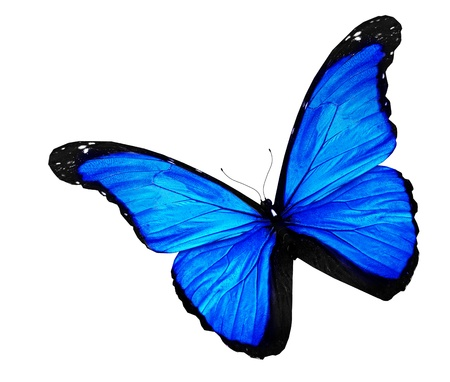 blue violet bright: Blue butterfly on white background