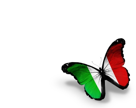 Italian flag butterfly, isolated on white background photo