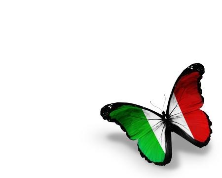 italien flagge: Italienischer Flagge Schmetterling, isoliert auf wei�em Hintergrund