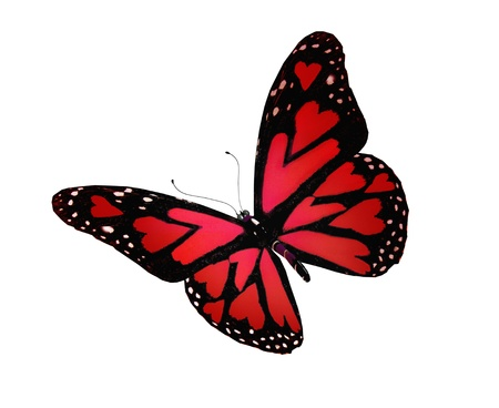 Red butterfly with hearts on wings, isolated on white photo