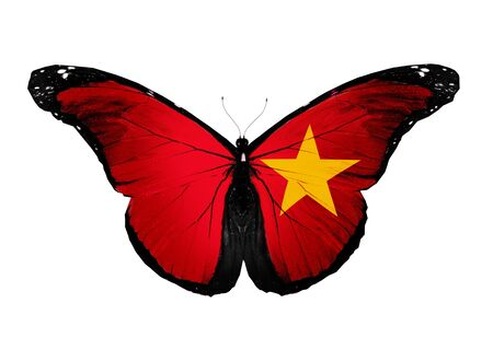 Vietnamese flag butterfly, isolated on white background photo