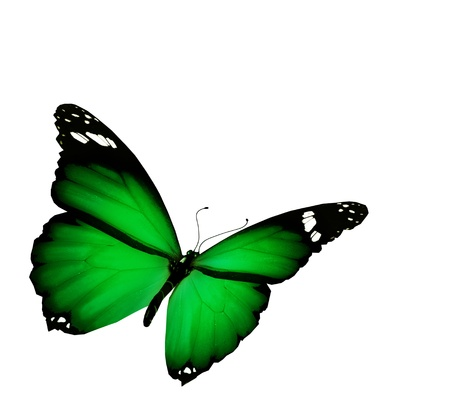 blue green background: Green butterfly flying, isolated on white background Stock Photo