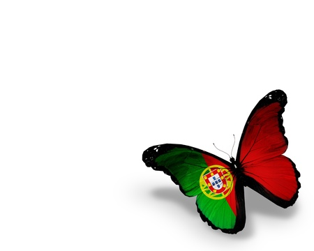 Portuguese flag butterfly, isolated on white background