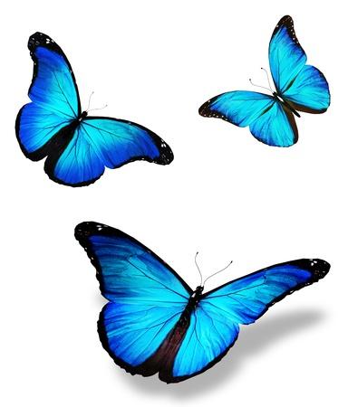 mariposa azul: Tres mariposa azul