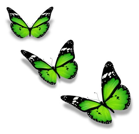 mariposas volando: Tres mariposas verdes, aislados en blanco