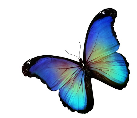 Blue butterfly on white background photo
