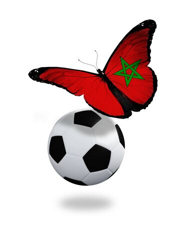 ball like: Concept - butterfly with Moroccan flag flying near the ball, like football team playing
