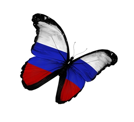 russia: Russian flag butterfly flying, isolated on white background