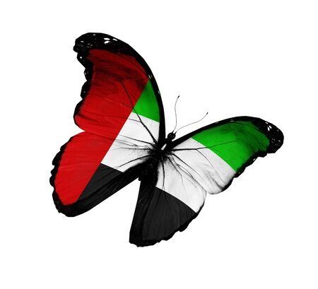 united arab emirate: UAE flag butterfly flying, isolated on white background Stock Photo