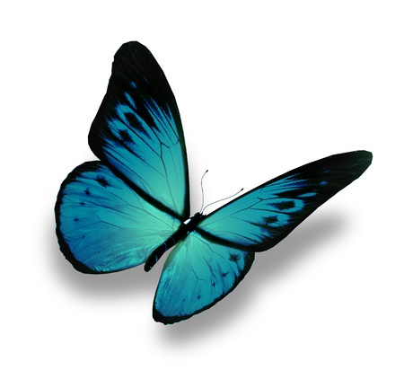 black and blue butterfly flying: Blue butterfly flying, isolated on white background Stock Photo