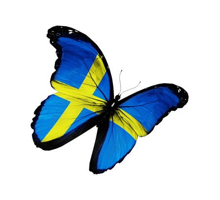 Swedish flag butterfly flying, isolated on white background photo