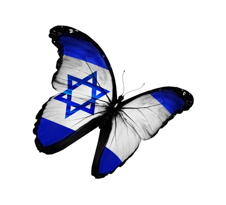 Israeli flag butterfly flying, isolated on white background photo