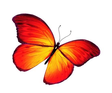 Orange mariposa volando, aislado sobre fondo blanco