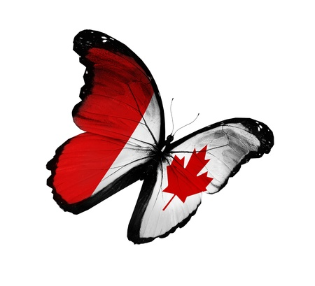 canadian state flag: Canadian flag butterfly flying, isolated on white background