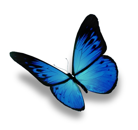 Blue butterfly flying, isolated on white background Stock Photo