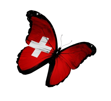 Swiss flag butterfly flying, isolated on white background