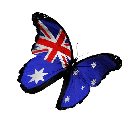 australia day: Australian flag butterfly flying, isolated on white background