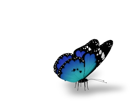 Blue butterfly on white background Stock Photo - 14554554