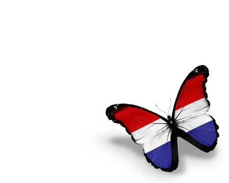 netherlandish: Netherlandish flag butterfly, isolated on white background