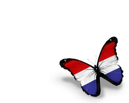 drapeau hollande: Papillon drapeau n�erlandais, isol� sur fond blanc