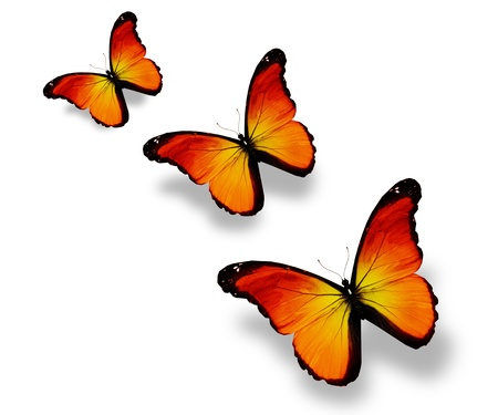 Three orange butterflies, isolated on white photo