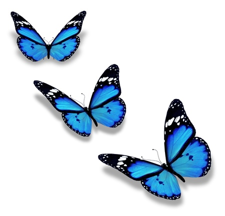 Three blue butterflies, isolated on white photo