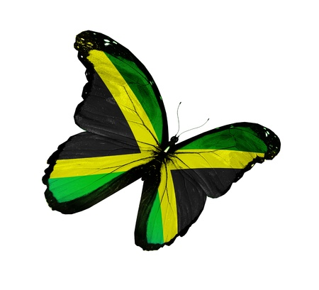 Jamaican flag butterfly flying, isolated on white background